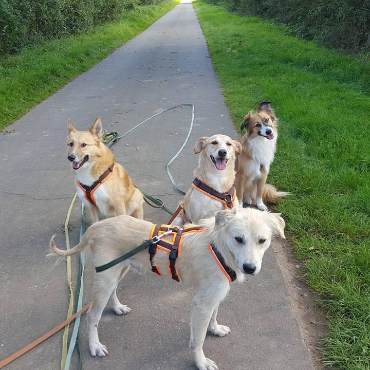 Sicherheitsempfehlungen nach Einzug eines Tierschutzhundes
